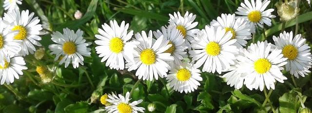 flower-bandeau