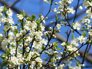 il faut l arbre un vieux bois pour fleurir il faut d abord mourir pour rena tre un jour. Black Bedroom Furniture Sets. Home Design Ideas