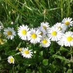 flower-901030_640